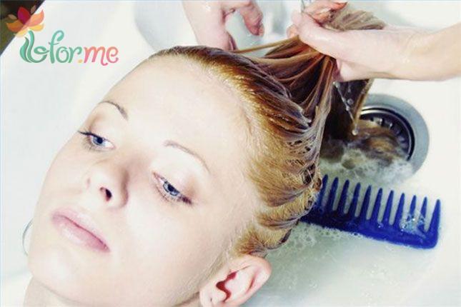 chamomile and hair1