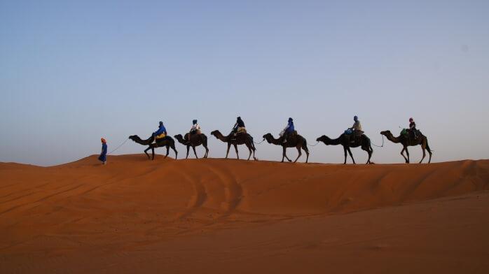 Верблюды в Марокко