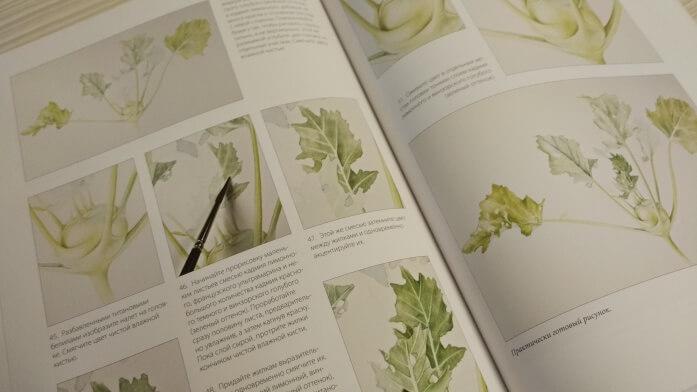 Книга Портреты фруктов и овощей